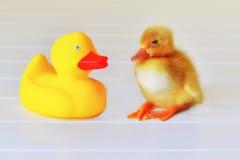 Amour en caoutchouc de Duckie Photographie stock libre de droits