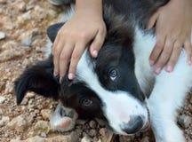 Amour entre l'enfant et le chien Photo libre de droits