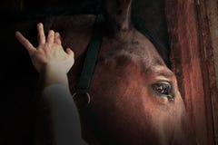 Amour entre le cheval et la fille Photographie stock