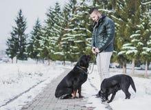 Amour entre le chien et l'homme Photos stock