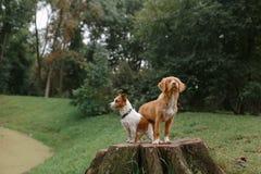 Amour et étreinte de chien Photographie stock libre de droits