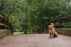 Amour et étreinte de chien Image libre de droits