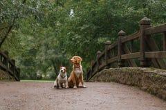 Amour et étreinte de chien Images stock