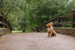 Amour et étreinte de chien Photo libre de droits