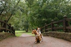 Amour et étreinte de chien Photos stock