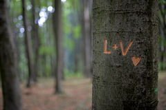 Amour et arbres Image libre de droits