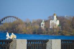 Amour et colombes Photographie stock libre de droits