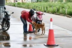 Amour et compassion entre les chiens humains et égarés dans la grande ville Image stock