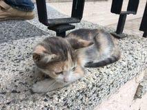Amour et dévouement pour sauver des chatons Photos stock