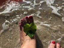 amour et feuilles en forme de coeur de la vigne de chemin de fer et du x28 ; vine& x29 de perle ; I Photographie stock