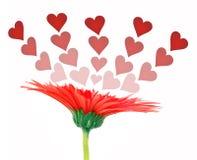 Amour et fleur Photo libre de droits