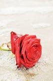Amour et mousse, symboles Images libres de droits