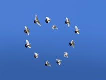 Amour et pigeons Image libre de droits