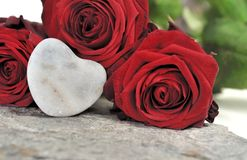 Amour et roses Photographie stock