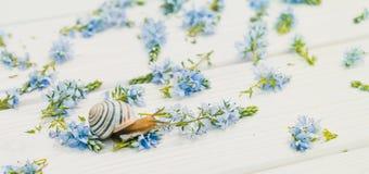 Amour et tendresse Un escargot et un décor minuscules dans le style de la Provence Images libres de droits