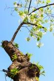 Amour fleurissant dans les branches Photos libres de droits