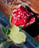 Amour gelé Photographie stock