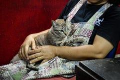 Amour gratuit pour des chats Photo libre de droits