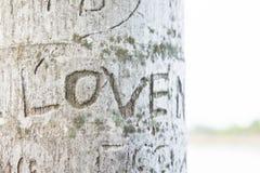 Amour gravé à l'eau-forte sur l'arbre, le mot Image stock