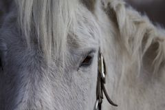 Amour gris de poney ! Images libres de droits