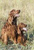 Amour heureux de chien - concept d'amitié Photographie stock