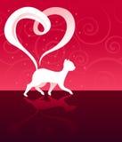 Amour Kitty Photo stock