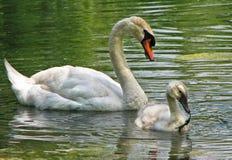 Amour maternel Photo libre de droits