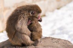 Amour maternel de singe Photo stock