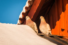 Amour-oiseaux photos libres de droits
