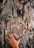 Amour perdu implorant - coeur découpé dans l'écorce d'arbre Photo libre de droits