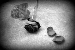 Amour perdu noir et blanc Photos libres de droits