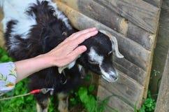 Amour pour des animaux Images stock