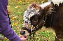 Amour pour des animaux Photo libre de droits