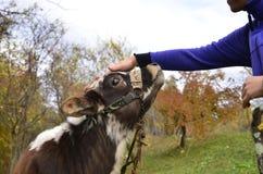 Amour pour des animaux Image libre de droits