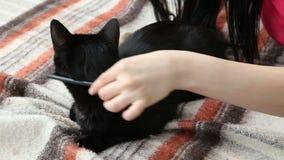 Amour pour des animaux familiers belle brune peignant son chat noir à la maison sur le lit banque de vidéos