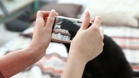 Amour pour des animaux familiers la maîtresse prend des photos de son chat noir sur un smartphone à la maison sur le lit banque de vidéos