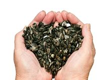 Amour pour des graines de tournesol Photographie stock