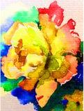 Amour romantique sensible simple de jaune de nature de fond d'art d'aquarelle de fleur colorée fraîche de rose Photographie stock