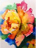 Amour romantique sensible simple de jaune de nature de fond d'art d'aquarelle de fleur rose colorée fraîche de rose Photographie stock libre de droits