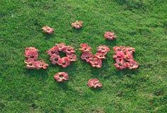 Amour sur l'herbe verte Photographie stock