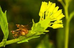 Amour sur la fleur Image libre de droits