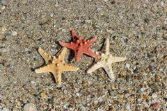 Amour sur la plage Images stock