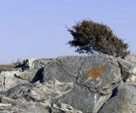 Amour sur les roches Photo libre de droits
