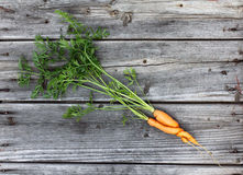 Amour végétal pendant l'été Photo stock