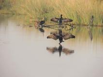 Amour vrai par nature, ailes répandues à accueillir Photo libre de droits