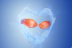 Amoureux de poissons Image stock