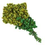 Ampère-geactiveerd eiwit verbindend kinase (AMPK) fragment met AMPÈRE. AMPÈRE Stock Afbeelding
