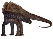 Ampelosaurus Armored Dinosaur. Ampelosaurus was a herbivorous sauropod dinosaur that lived in Europe during the Cretaceous Era Royalty Free Stock Photo