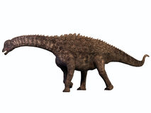 Ampelosaurus on White Stock Image