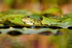 Amphibian, Animal, Biotope Royalty Free Stock Images
